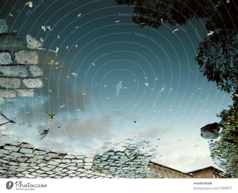 Blick ins Innere Wasser Einsamkeit Tod Umwelt Herbst abstrakt Gefühle Traurigkeit Reflexion & Spiegelung träumen Stimmung Wetter Angst Unterwasseraufnahme Klima