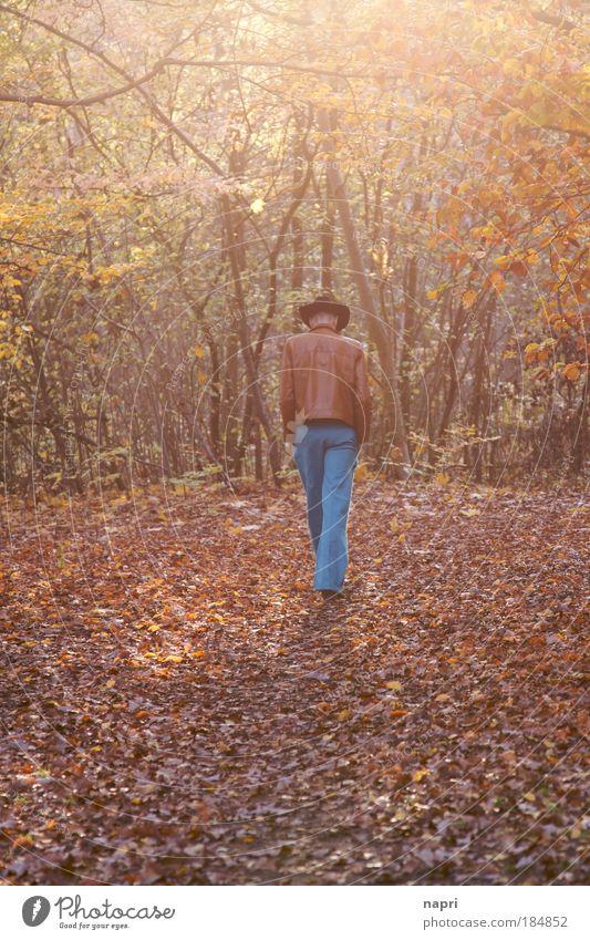 Herbstklischee Mensch Mann ruhig gelb Wald Wege & Pfade Denken Wärme braun Erwachsene gehen maskulin laufen gold groß