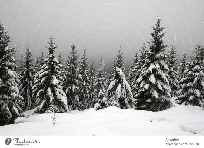 Tiefverschneiter Harz am Goetheweg zum Brocken Farbfoto Gedeckte Farben Außenaufnahme Menschenleer Textfreiraum oben Tag Dämmerung Silhouette Umwelt Natur