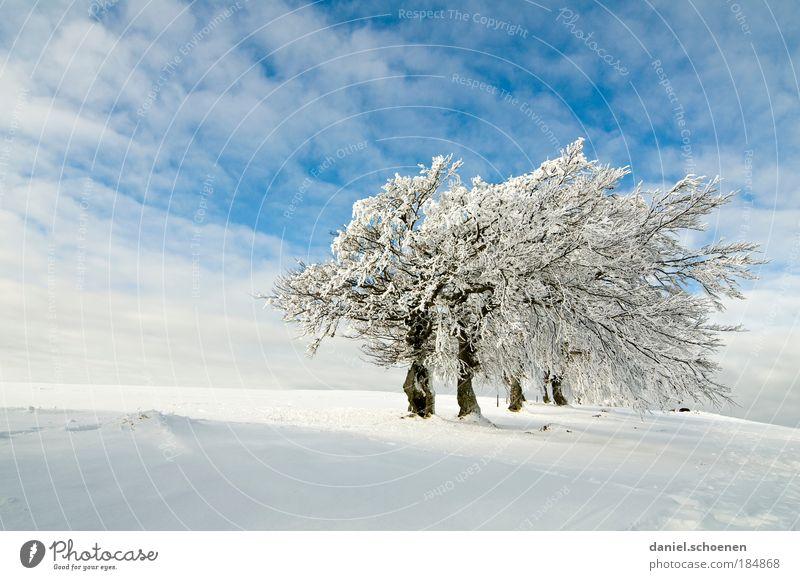 Seitenwind, blauweiß Natur weiß Baum blau Winter Ferien & Urlaub & Reisen Einsamkeit Ferne Schnee Berge u. Gebirge Eis Wind Wetter Jahreszeiten elegant Frost