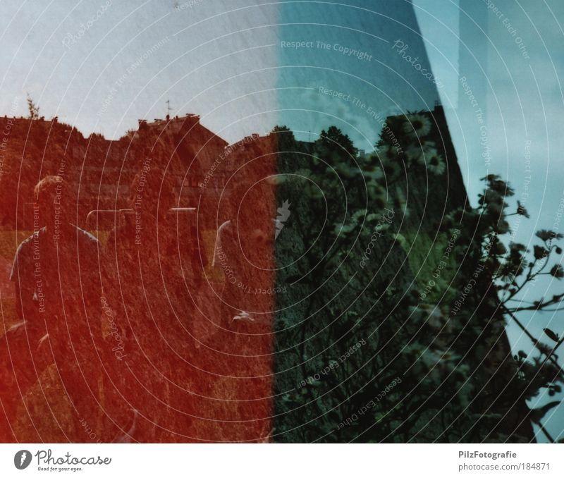 Mauerblümchen Mensch Natur Jugendliche weiß rot Pflanze schwarz Leben Wand Traurigkeit Mauer träumen Freundschaft maskulin Wachstum historisch