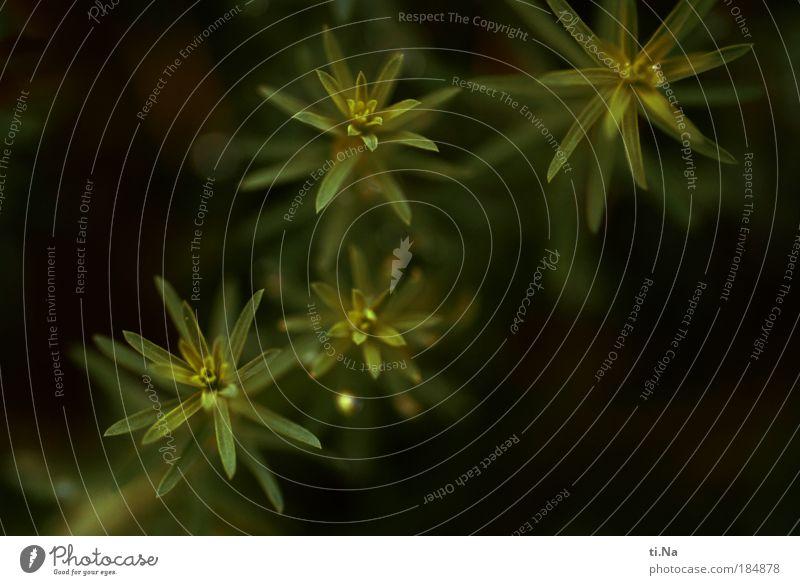 Vogelperspektive Natur schön grün Pflanze schwarz Landschaft Umwelt Wachstum Grünpflanze Nutzpflanze Wildpflanze Lein