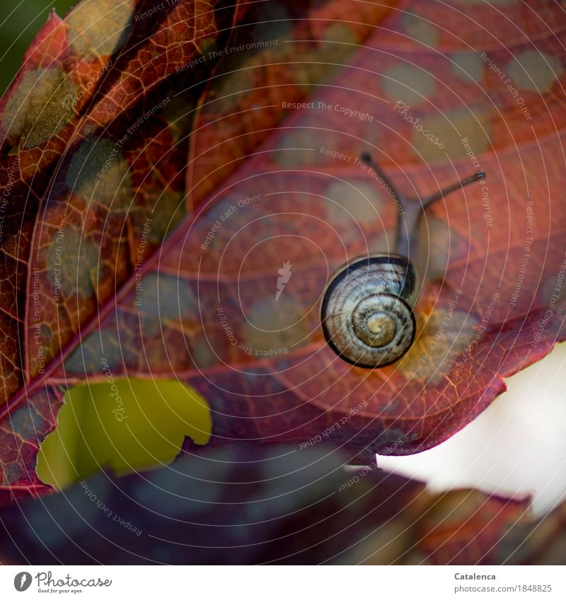 Blattunterseite Natur Pflanze rot Tier gelb Herbst Bewegung Garten braun Zufriedenheit ästhetisch Klima entdecken Mut anstrengen