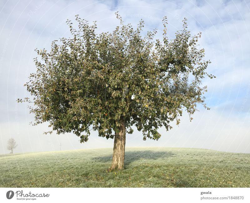 lonesome apple Apfel Frucht Spazierweg Landschaft Natur Sonne Sonnenlicht Herbst Schönes Wetter Nebel Pflanze Baum Obstbaum Apfelbaum Ernte Feld Hügel Weide