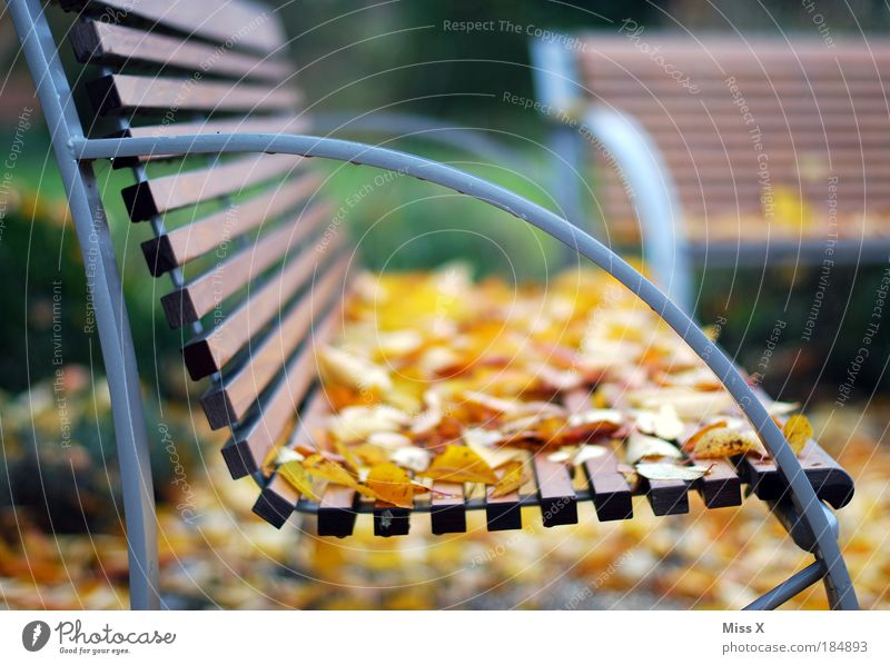 Herbstbank Natur Baum Ferien & Urlaub & Reisen ruhig Blatt gelb Erholung Wiese Garten Park Wetter Umwelt Ausflug Tourismus