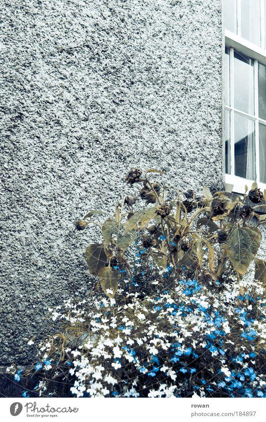 blauweiss blau weiß Blume Haus kalt Fenster Wand grau Gebäude Mauer Dekoration & Verzierung Häusliches Leben Bauwerk Blühend Putz