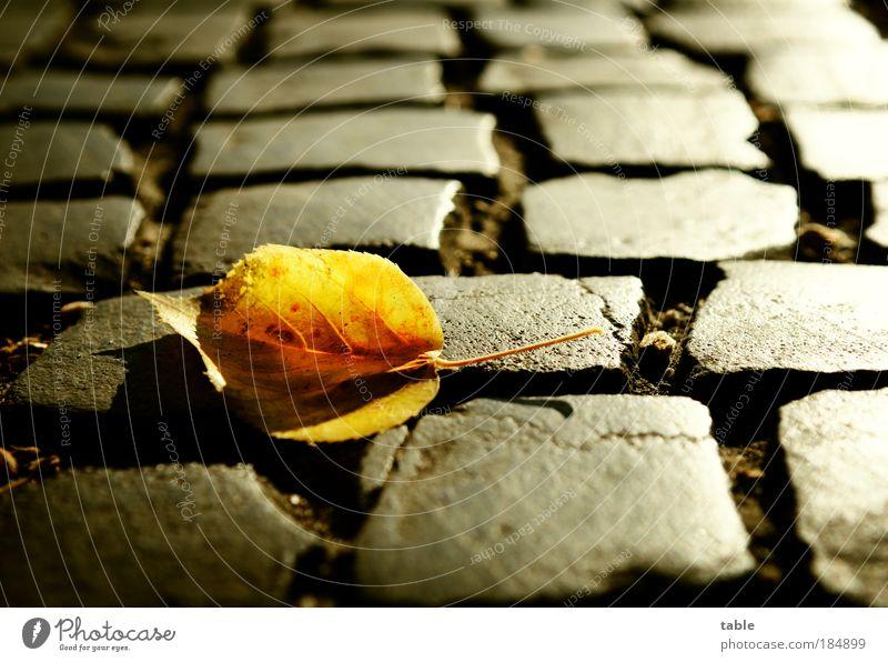 ein letzter Gruß . . . Natur alt Pflanze Blatt schwarz Einsamkeit gelb Straße Gefühle Kontrast grau Stein Traurigkeit Wege & Pfade glänzend Umwelt