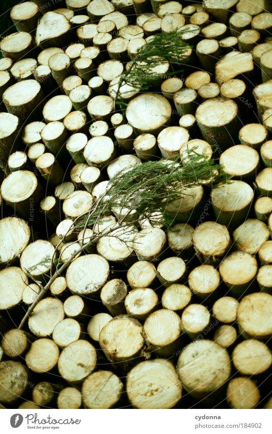 Holz Farbfoto Außenaufnahme Nahaufnahme Detailaufnahme Muster Strukturen & Formen Menschenleer Tag Licht Schatten Kontrast Zentralperspektive Totale Natur