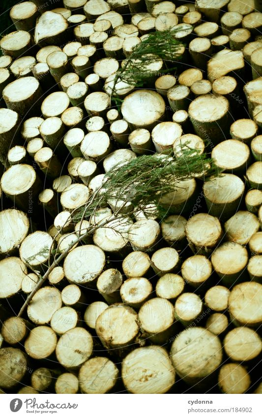 Holz Natur Leben Tod Zeit ästhetisch Kreis Zukunft Idee bedrohlich Vergänglichkeit Wandel & Veränderung Baumstamm Bildung Ende Material Umweltschutz