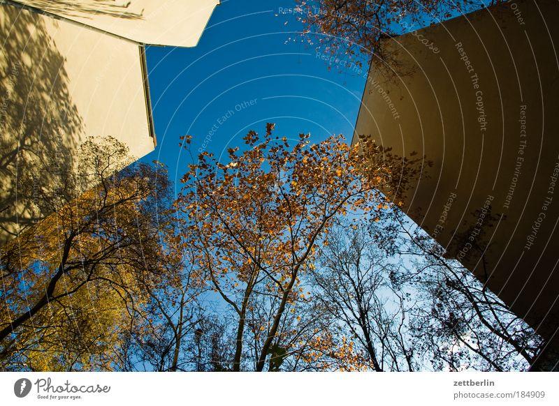 Froschperspektive Blatt gold Herbst Jahreszeiten Herbstlaub Oktober Hinterhof Haus Gebäude Mauer Brandmauer Mieter Vermieter Himmel Morgen Morgendämmerung Sonne