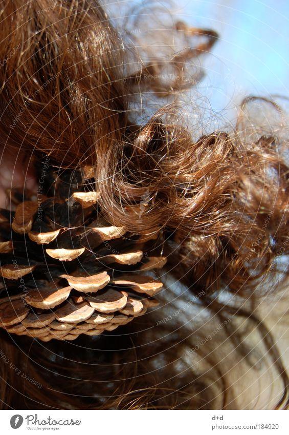 >>> Natur schön Baum Herbst natürlich Garten Haare & Frisuren braun Dekoration & Verzierung Schmuck brünett Locken Tanne Vorfreude herbstlich Accessoire