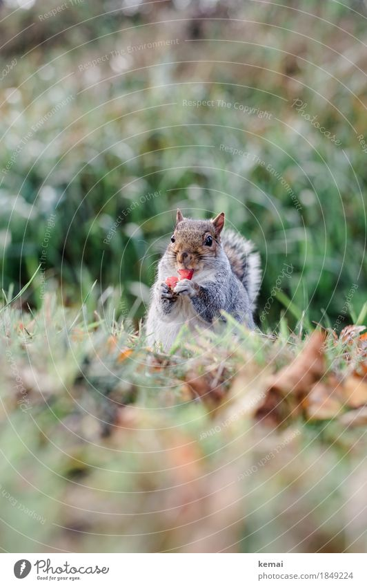 Gesunde Ernährung Frucht Apfel Leben harmonisch Wohlgefühl Zufriedenheit Umwelt Natur Pflanze Tier Herbst Gras Blatt Wildpflanze Park Wiese Wildtier Tiergesicht