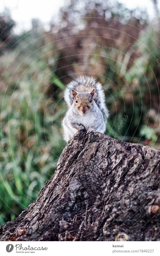 My name is Squirrel, Cyrill the Squirrel. Natur Baum Tier ruhig Umwelt Herbst Park Wildtier sitzen authentisch niedlich Neugier festhalten Fell Wachsamkeit