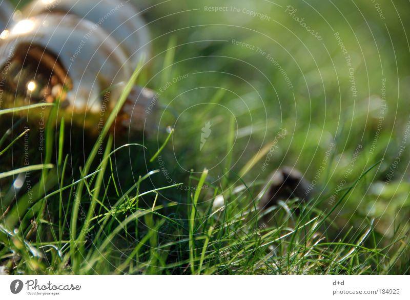 ° Weihnachten & Advent grün Wiese Gras Gold gold frisch Rasen Dekoration & Verzierung Kugel Pflanze Jahreszeiten Halm Christbaumkugel Vorfreude
