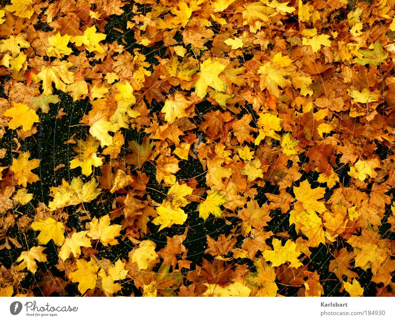 ahorn. sirup. Lifestyle Design Erntedankfest Kindergarten Gartenarbeit Natur Herbst Schönes Wetter Baum Blatt Park Platz Verkehrswege Straße Wege & Pfade gelb