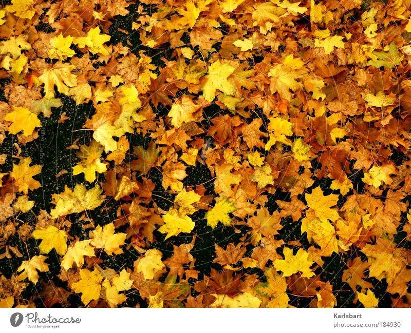 ahorn. sirup. Natur Baum Farbe Blatt gelb Straße Leben Herbst Wege & Pfade Freiheit Park Kraft gold liegen Platz Design