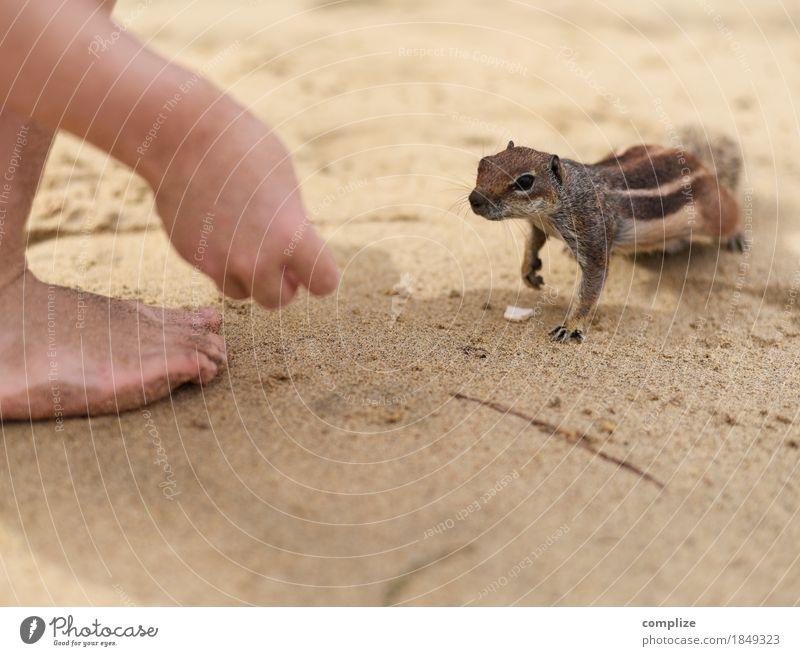 Streifenhörnchen Ernährung Gesundheit Kind Kleinkind Umwelt Wellen Küste Seeufer Strand Meer Tier 1 Fressen Verantwortung Hilfsbereitschaft füttern Eichhörnchen