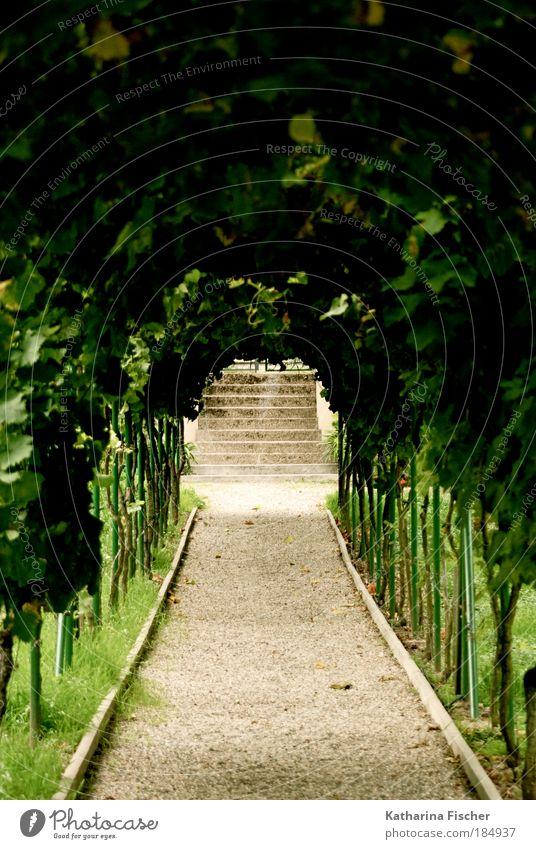 Green Way Natur grün Pflanze Sommer Blatt Gras Garten Wege & Pfade Park Sand braun Umwelt Erde Treppe Wein