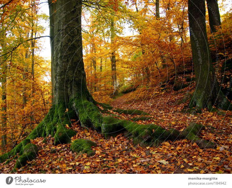 Goldener Herbst 1 Baum Landschaft Blatt ruhig Wald Wärme Wege & Pfade Stimmung Erde Lebensfreude Schönes Wetter harmonisch Moos Farbe Thüringen