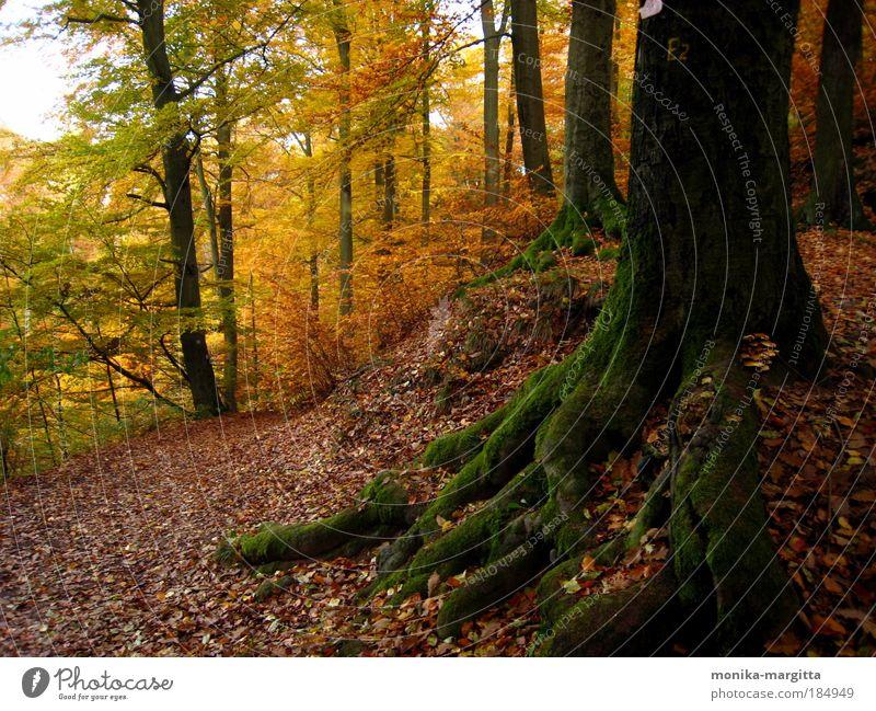 Standhaft Natur Baum Wald Herbst Wege & Pfade Landschaft Stimmung Erde Moos Schönes Wetter Thüringen Thüringer Wald
