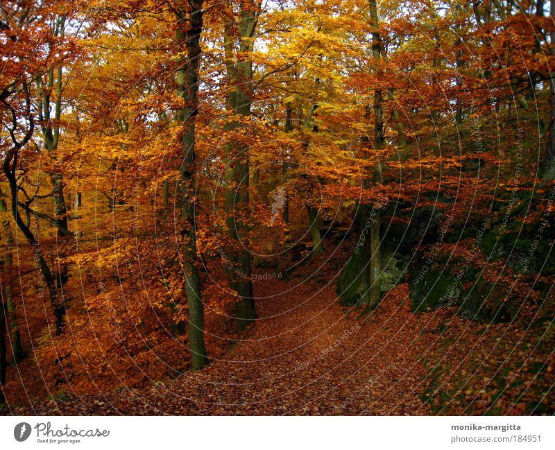 Goldener Herbst 2 Natur Baum ruhig Wald Herbst Wege & Pfade Landschaft Zufriedenheit Felsen Schönes Wetter Geborgenheit