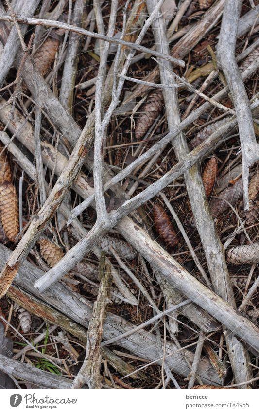 Stolz auf Holz Baum Hintergrundbild Boden Ast Waldboden Brennholz Tannenzapfen