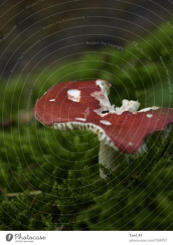 Waldimpression Natur weiß grün rot Pflanze Sommer Wachstum Pilz Fliegenpilz