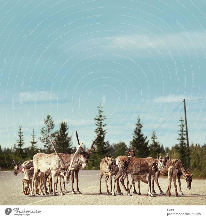 Gruppenfoto Ausflug Umwelt Natur Pflanze Tier Himmel Baum Wald Verkehr Verkehrswege Straßenverkehr Nutztier Wildtier Tiergruppe Herde Tierfamilie warten Neugier