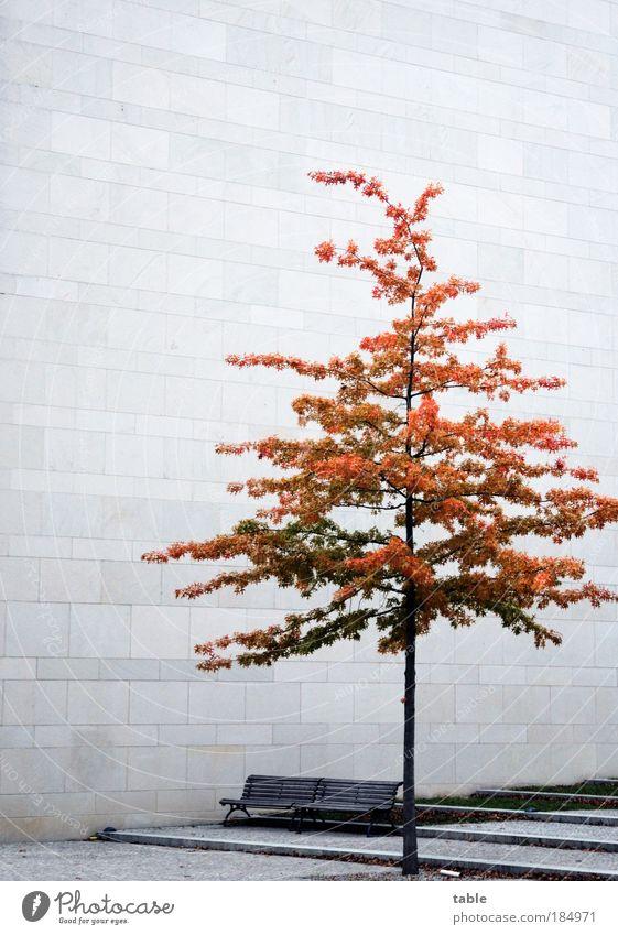 Beton.Bank.Baum. Einsamkeit kalt Wand Architektur Traurigkeit Gefühle Herbst Mauer Holz grau Stein braun Sand Fassade Metall