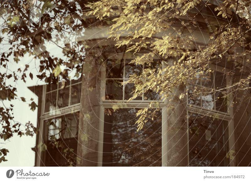 vor dem alten Herrenhaus (2)... alt Haus Herbst Fenster Gebäude Architektur Burg oder Schloss verfallen Bauwerk Ruine durchsichtig falsch Doppelbelichtung Zweige u. Äste herrschaftlich Erker