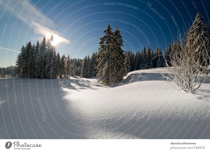 blauweißer Pulverschneesonnenaufgang Natur Baum Ferien & Urlaub & Reisen Winter ruhig Wald Landschaft Schnee Freiheit Horizont Eis Klima Tourismus