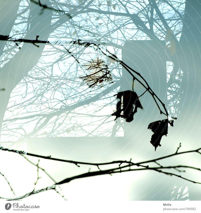 Totensonntag Trauerfeier Beerdigung Natur Pflanze Herbst Baum Blatt Zeichen Kreuz Traurigkeit verblüht dehydrieren trist grau Stimmung Glaube träumen Tod
