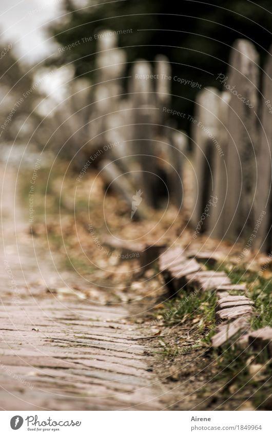 Natur geht ihren ewgen Lauf Herbst Friedhof Wege & Pfade Grabstein Pflastersteine Kopfsteinpflaster Grabmal Stein dunkel gruselig historisch trist braun grau