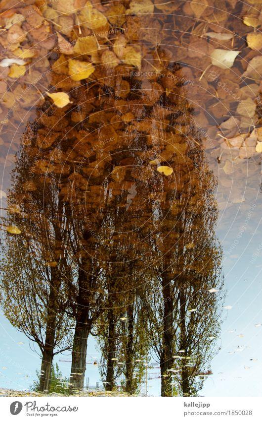 golden brown Umwelt Natur Landschaft Pflanze Tier Herbst Wetter Regen Baum Blatt Park träumen Pappeln Herbstlaub Reflexion & Spiegelung Pfütze Kran braun Gold