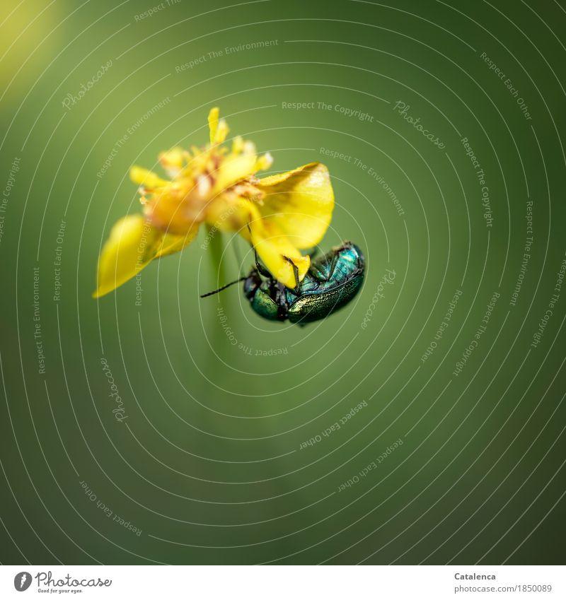 Hangelei Natur Pflanze Sommer grün Blume Tier schwarz gelb Blüte Wiese glänzend Kraft ästhetisch Schönes Wetter türkis Stress