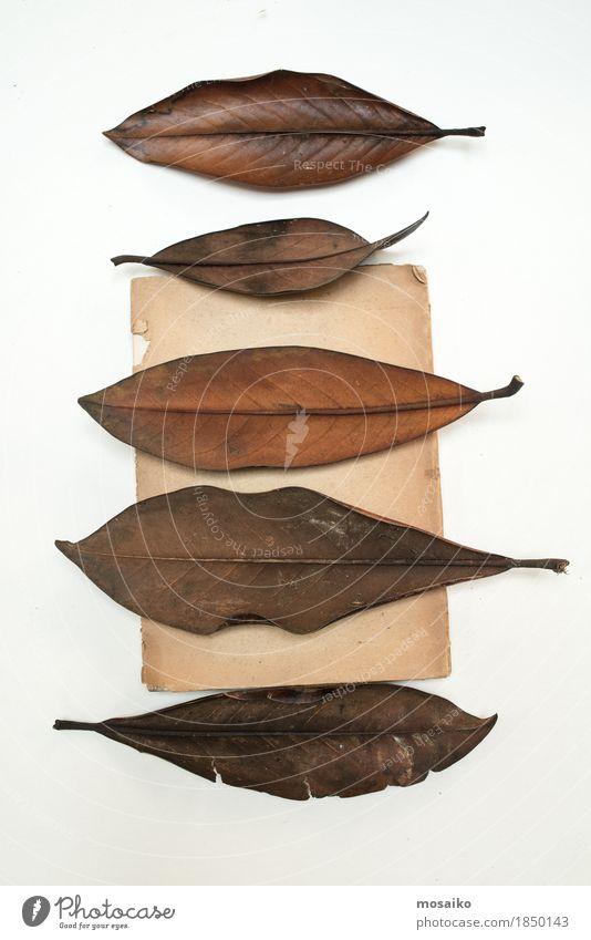 Herbarium Kunst Natur Pflanze Blatt exotisch alt ästhetisch Zusammensein einzigartig Originalität braun Bildung Design Kreativität retro Wissenschaften Botanik