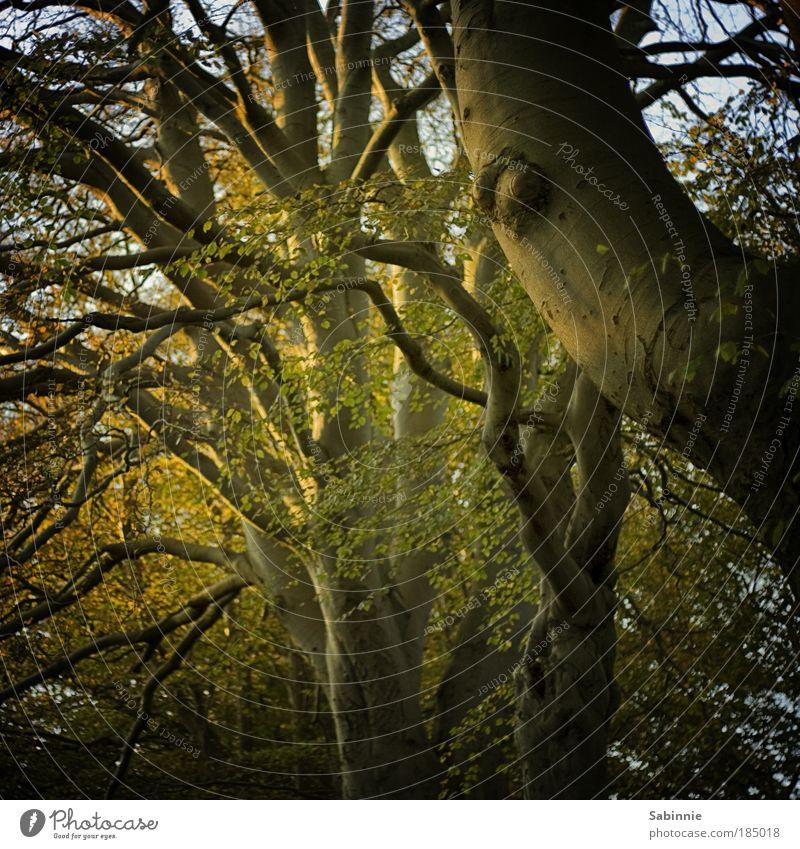 Schottischer Herbst Natur Baum Wald Landschaft Stimmung Sonnenaufgang Schönes Wetter