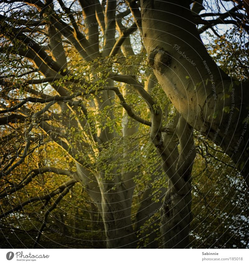 Schottischer Herbst Natur Baum Wald Herbst Landschaft Stimmung Sonnenaufgang Schönes Wetter