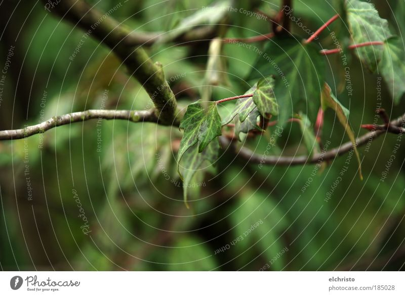 Tiefe Blicke Natur grün Baum Pflanze Blatt dunkel Ast Stengel Wildpflanze geschwungen