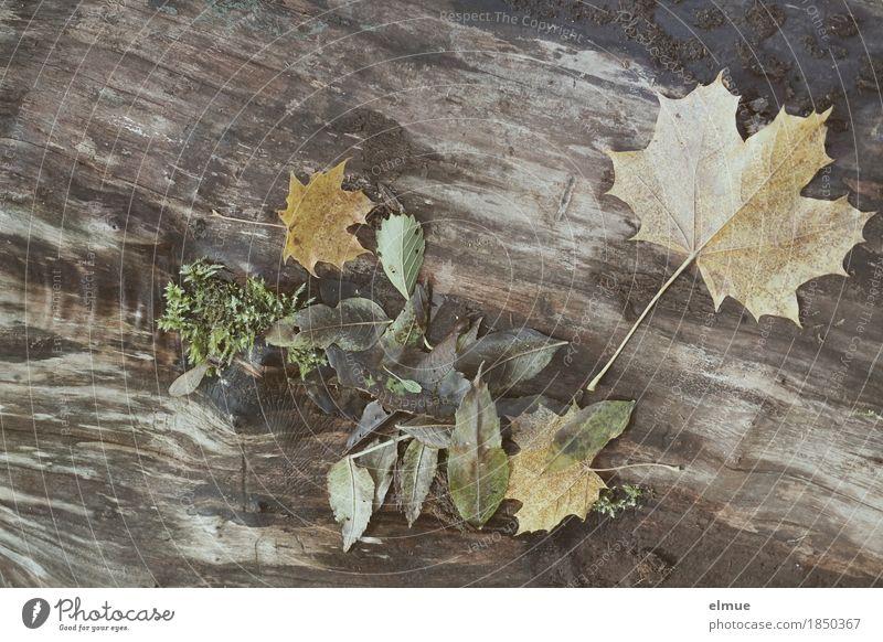 Herbst Umwelt Natur Baum Blatt Baumstamm Ahornblatt Park Blues liegen dunkel trist Romantik Traurigkeit Schmerz Sehnsucht Senior Design Einsamkeit