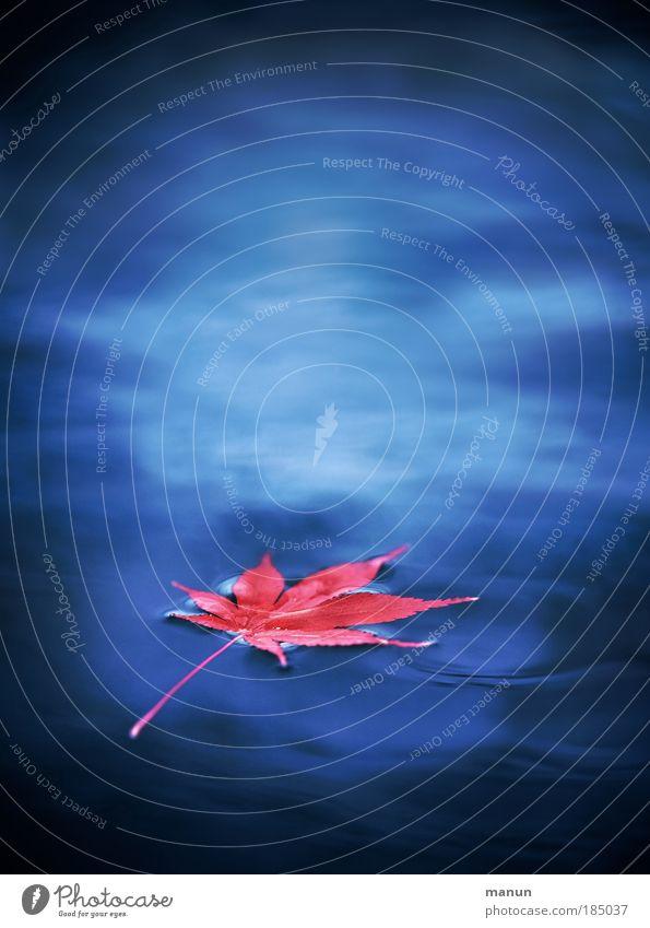 buntes Treiben Natur Wasser blau rot ruhig Blatt Einsamkeit Leben kalt Erholung Herbst träumen Traurigkeit See Park rosa