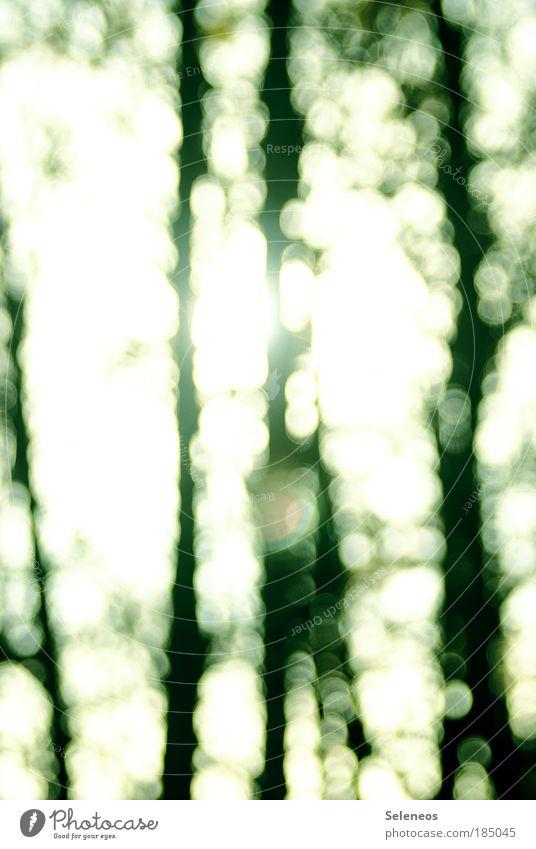 Zauberwald Natur schön Himmel Baum Sonne Pflanze Wald Erholung Herbst Linie hell glänzend Wetter Umwelt ästhetisch