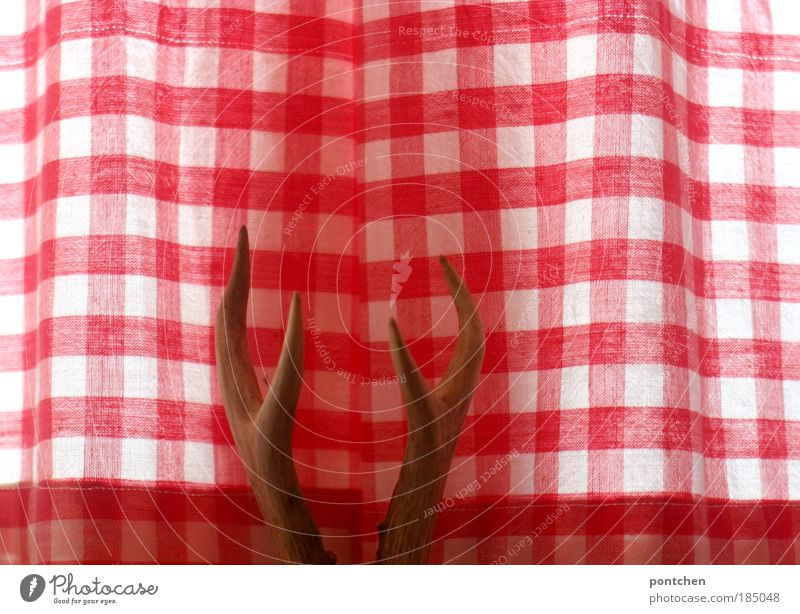 Geweih Tier Tod Fenster Stil Innenarchitektur Raum Freizeit & Hobby maskulin Design Dekoration & Verzierung Stoff Jagd Horn Vorhang Bayern Gardine