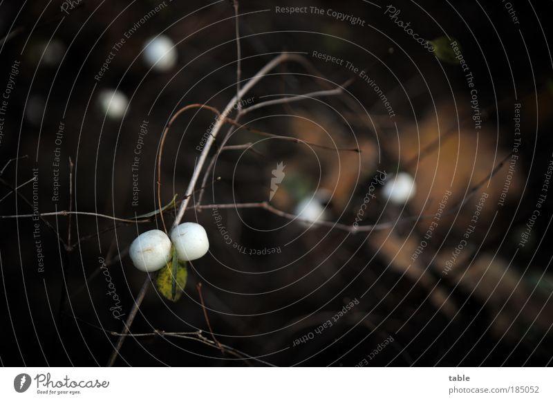 Knaller... Natur weiß Pflanze Blatt schwarz ruhig Umwelt Herbst Freiheit Park braun Sträucher einzigartig Vergänglichkeit Gelassenheit Zusammenhalt