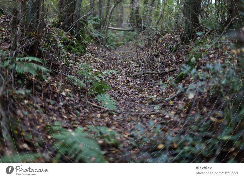 Der Graben Umwelt Natur Landschaft Pflanze Schönes Wetter Baum Sträucher Blatt Grünpflanze Wildpflanze Farn Wald Geäst Zweige u. Äste Wurzel Wassergraben