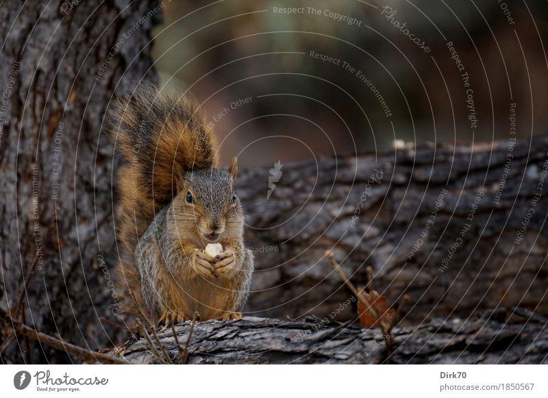 Alles für den Winterspeck. Natur Baum Tier dunkel Wald kalt Herbst klein Park frei Wildtier USA genießen Ast beobachten niedlich