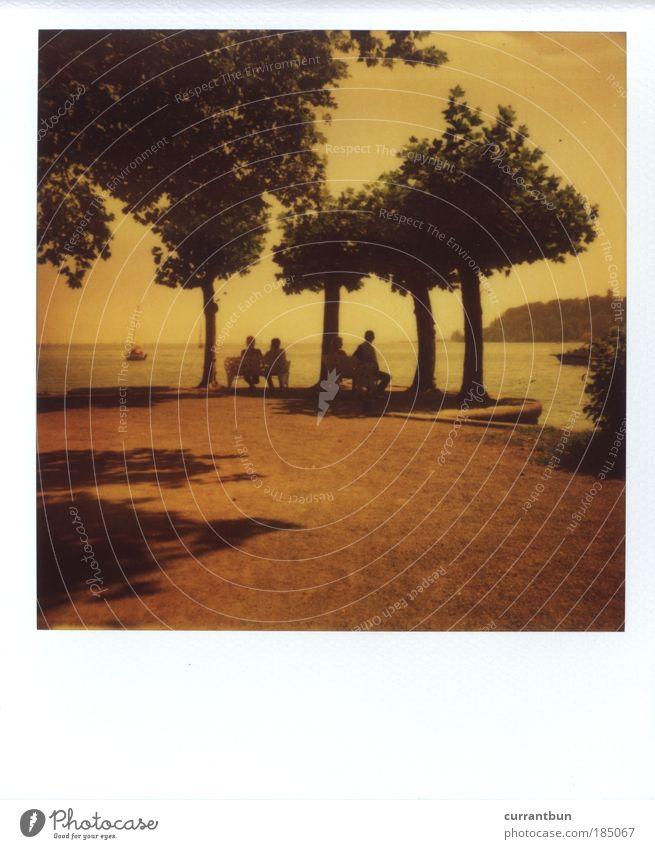 ...auf die alten Tage Wasser Idylle Kunst Natur stagnierend Stimmung Polaroid polaroid 200 779 Baum Mensch Bodensee Insel Mainau Bank sitzen Blick Seeufer