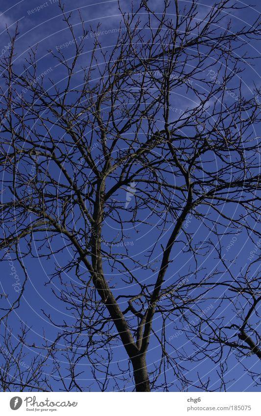 Kalter Ast vor blauem Himmel Natur Himmel Baum blau Pflanze schwarz Wolken kalt Herbst Stimmung braun einfach Schönes Wetter