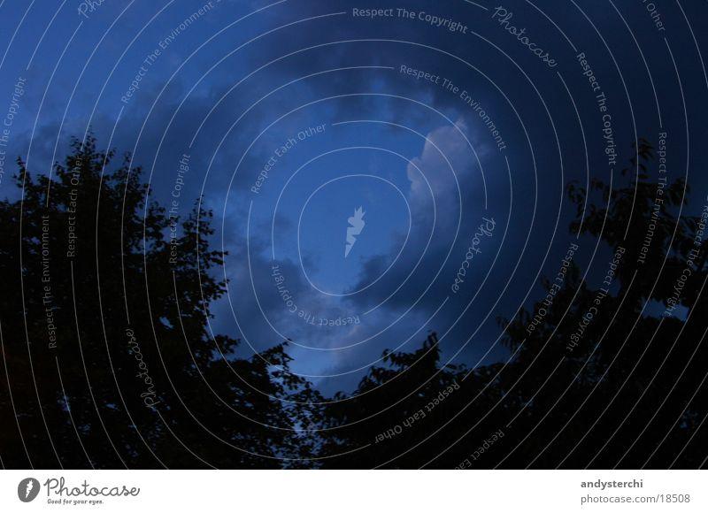 Dark Sky Wald Himmel Nacht Baum Tanne Wolken sky Abend Silhouette