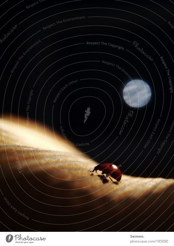 Mein WER-Marienkäfer Einsamkeit Tier Leben dunkel Bewegung Traurigkeit Wildtier außergewöhnlich Sehnsucht Punkt entdecken Jagd Mond skurril Appetit & Hunger